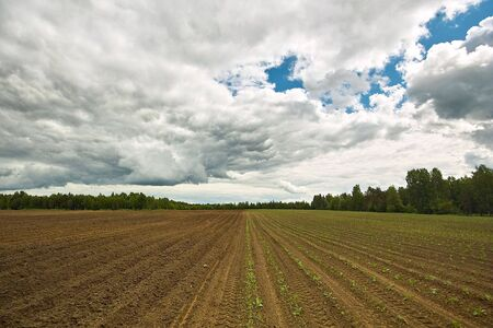 tillage: Ploughed field. Fresh tillage bordered with forest under cloudy sky Stock Photo