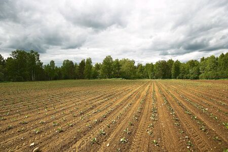 tillage: Ploughed field. Ploughed field. Fresh tillage bordered with forest under cloudy sky