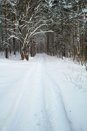Stamped path in the snowy forest
