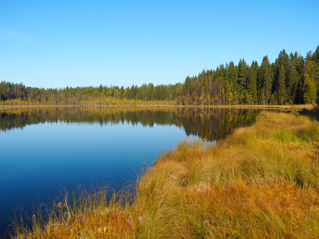 Forest Lake at sunrise morning. Grass and trees reflected in quiet water. Blue sky. Early autumn in Eastern Finland