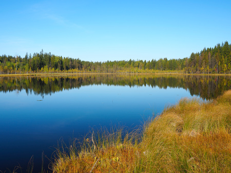 Forest Lake at sunrise morning. Grass and trees reflected in quiet water. Blue sky. Early autumn in Eastern Finland Stock Photo - 47194375