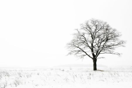 lonely oak tree in a winter field photo
