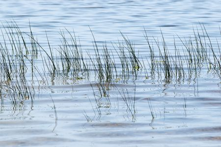 grass  in the blue rippled water Stock Photo