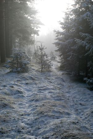 foggy path in the winter forest