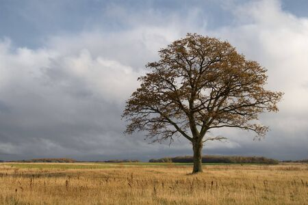 lonely oak on autumn day photo