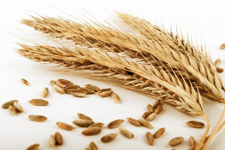 ripe rye ears and  seeds  on white background