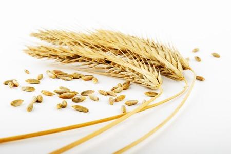 grain and wheat ears on white Stock Photo