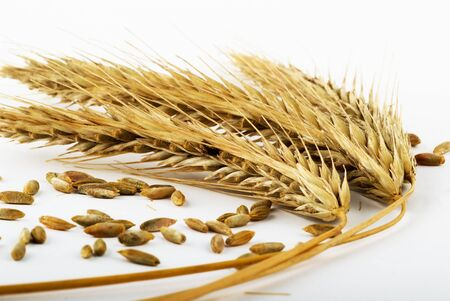 ripe ears of a rye Stock Photo - 1490235