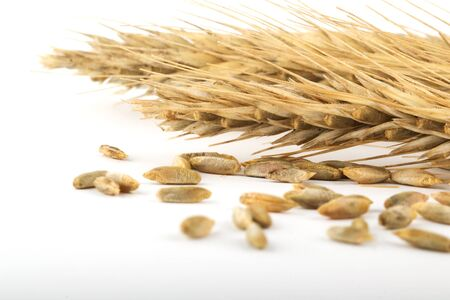 rye ears and grain on white Stock Photo - 1490491