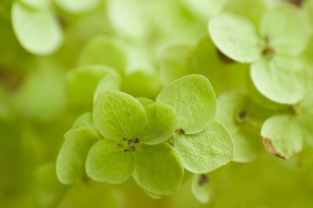 abstract light green leaf background (shallow DOF) Stock Photo