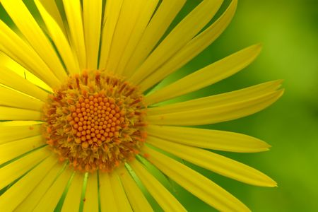 yellow flower over the green photo