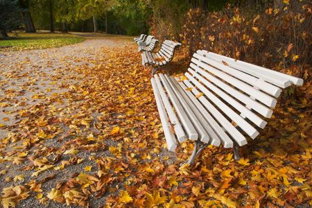 autumn alley with white benches photo