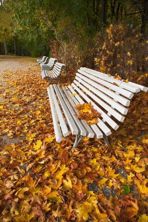 golden autumn leaves in a passage with benches Stock Photo