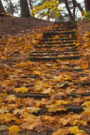 old stairs in park covered with yellow leaves