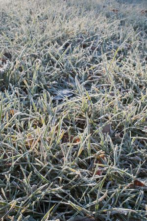 grass covered with hoarfrost background photo