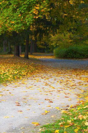 autumn in park - passage covered with fallen leaves Stock Photo
