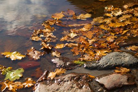 autumn leaves  in the puddle on sunny day