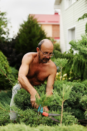 60 years old: Man gardener (60 years old) with clippers in hand making art cutting juniper. Selective focus. Stock Photo