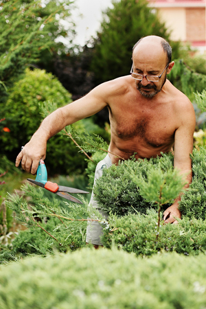 Man gardener (60 years old) with clippers in hand making art cutting juniper. Selective focus. Stock Photo