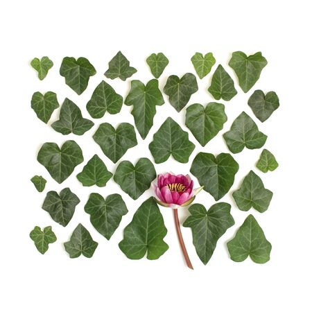 Creative arrangement of dogwood green leaves (cornus alba) and nymphaea waterlily purple flower on white background. Flat lay, top view.