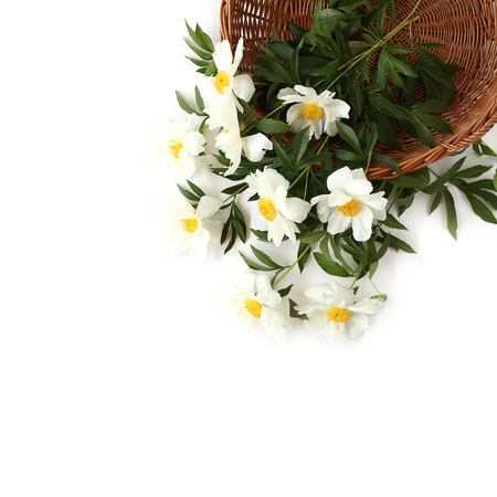 Beautiful white peonies in wooden basket on white background. Top view.