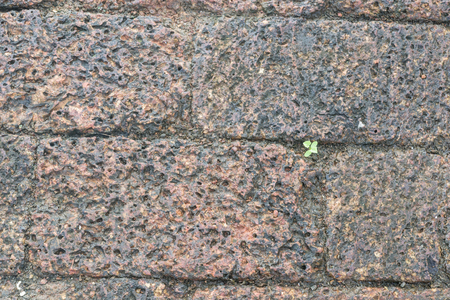 calcareous: Plant growing in the between stones. Stock Photo