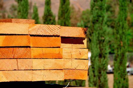 wood and tree bg Stock Photo