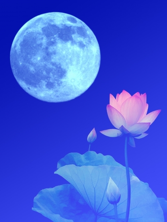 blue moon and lotus photo