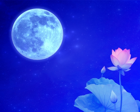 blue moon and lotus wallpaper