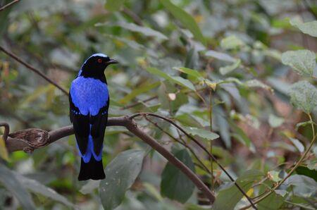 Blue Bird Stock Photo - 17593878