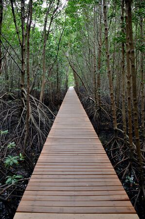 walkway in forest photo