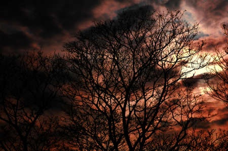 Shade tree in the evening