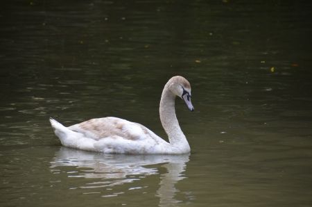 hidef: Geese sleep Stock Photo
