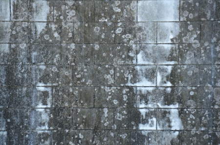 Concrete wall with black mold