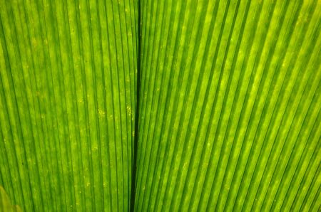 Green leaves background Stock Photo - 18819679