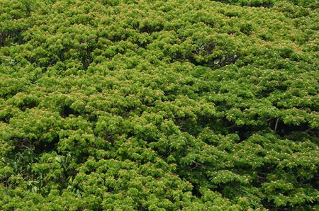 Green treetops background Stock Photo - 18819763