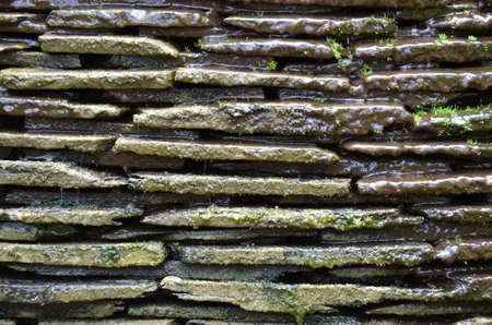 Moss textured wall Stock Photo - 18819738
