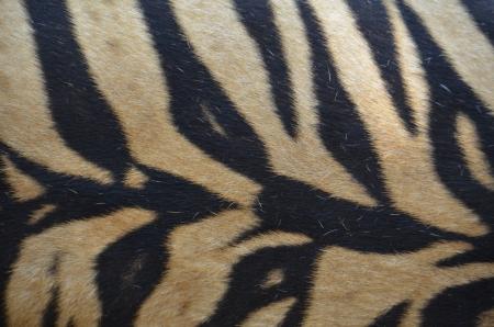 Tiger Skin Yellow Background Stock Photo - 18819685