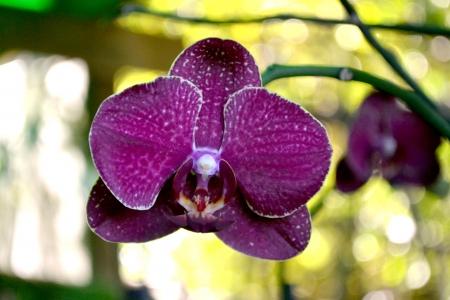 orchid flower purplish Stock Photo - 18819769