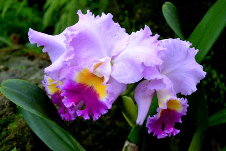Purple orchid fawer Stock Photo - 18819766