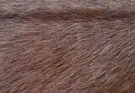 Deer skin texture Stock Photo