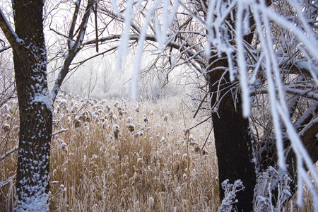 grass covered with snow in the fog. Winter landscape.