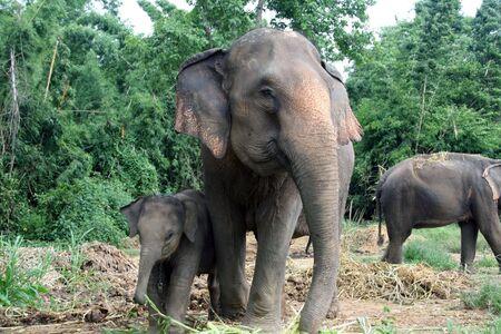 Mom Elephant with baby son Stock Photo
