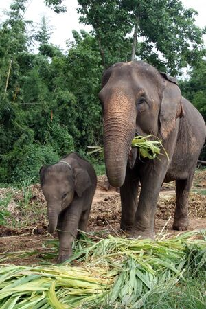 Mom  Elephant with baby son Stock Photo - 6752574