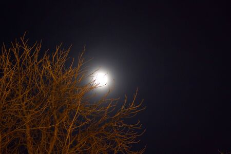 Moon and tree in the night