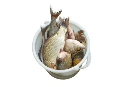 Fresh fish in white bucket, isolated in white background
