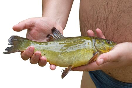 Fresh fish in fisherman hands isolated in white background photo