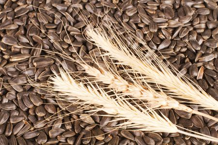 Black sunflower seeds with spikelets of wheat