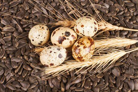 Nest of quail on sunflower seeds Stock Photo