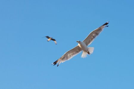 Beautiful seagull against the blue sky.